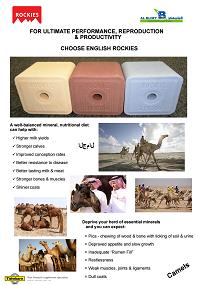 Saudi Agriculture 2016 camels