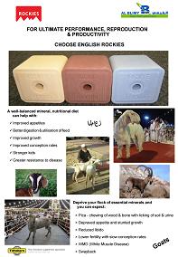 Saudi Agriculture 2016 goats