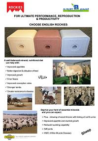 Saudi Agriculture 2016 sheep