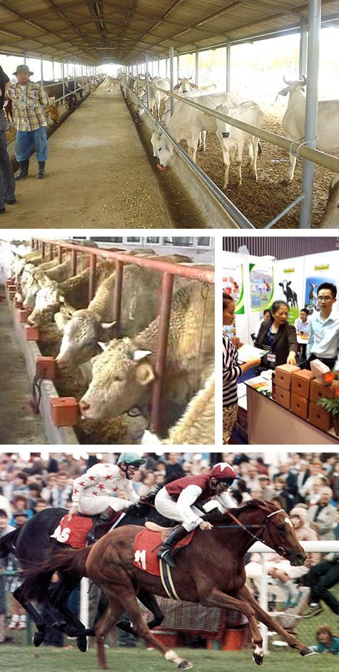 livestock diet